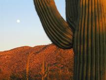 cactus-lateday